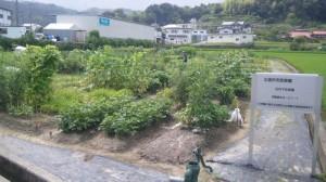 石内下沖菜園